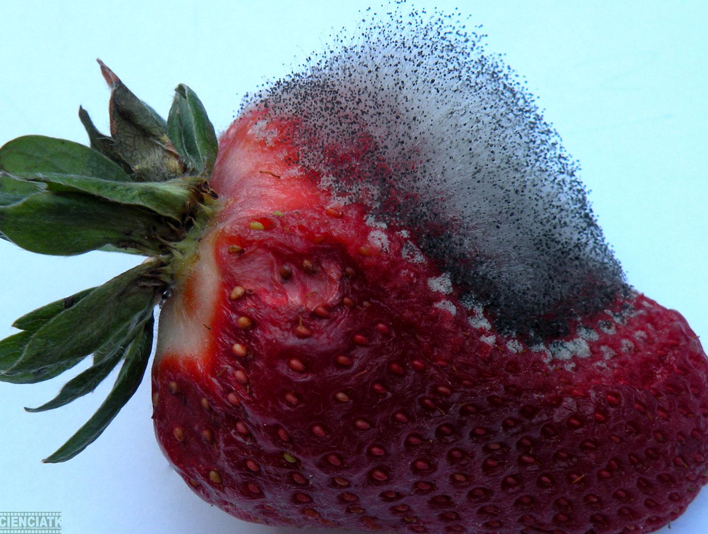 El vinagre del hongo de las uñas en las manos los modos eficaces